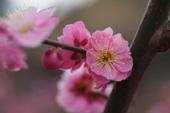 2月の誕生花と花言葉