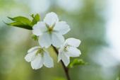 3月の誕生花と花言葉