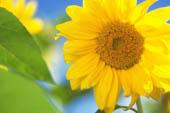 8月の誕生花と花言葉