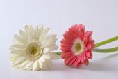 10月の誕生花と花言葉