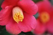 11月の誕生花と花言葉